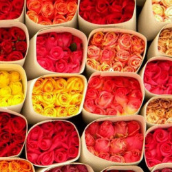 Assorted Roses 100 stems Growers Assortment
