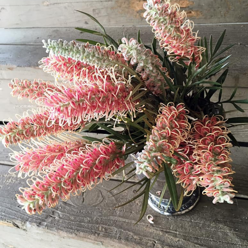 Grevillea Flowers 5 Bunches