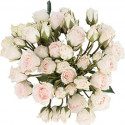 Spray Roses White Majolica By the Box 10 BUnches