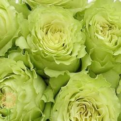 Lemonade Green Rose