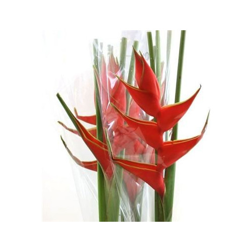 Heliconia Red Upright 20 Stems