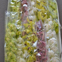Mini Cymbidium Orchids Assorted 10 stems
