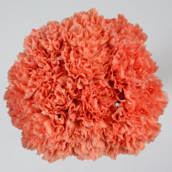 Carnations Solid Orange