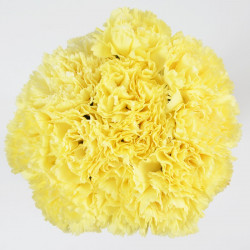 Carnations Solid Yellow