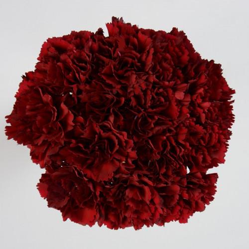 Carnations Solid Burgundy