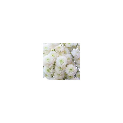 Buttons White Solid Pack 12 Bunches