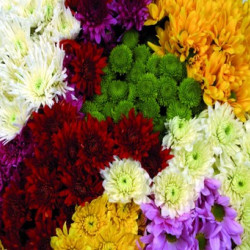 CDN Assorted 12 Bunches