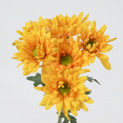 Daisy Bronze 12 Bunches