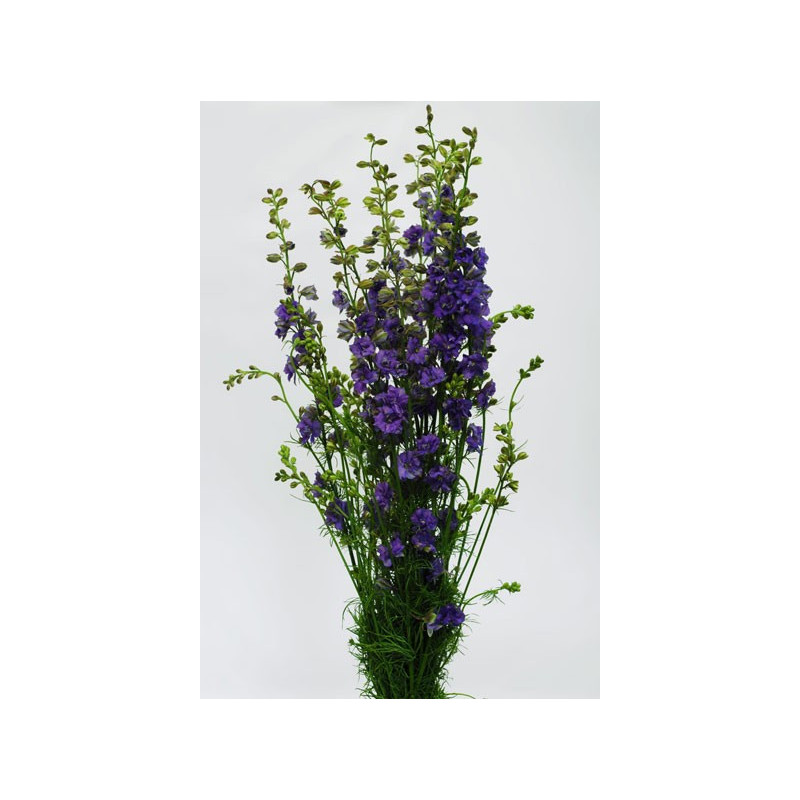 Larkspur By the Bunch Lavender