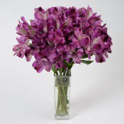 Alstromeria Purple By the Box