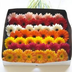Gerbera Daisy By the Box / Tray