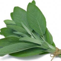 Sage Natural