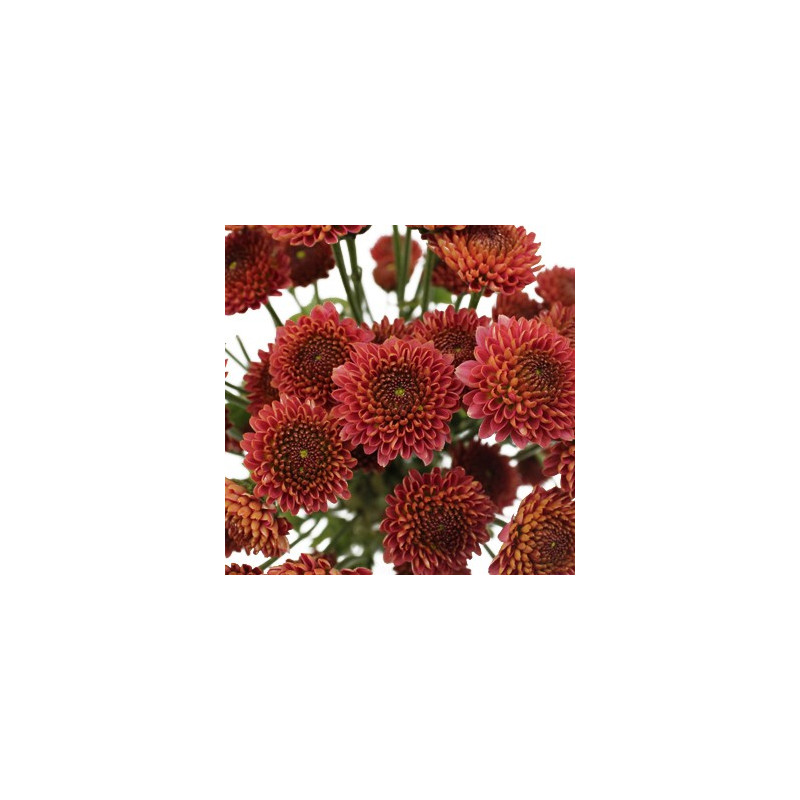 Buttons Red Solid Pack 12 Bunches