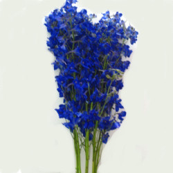 Delphinium Volkenfrieden by the bunch.