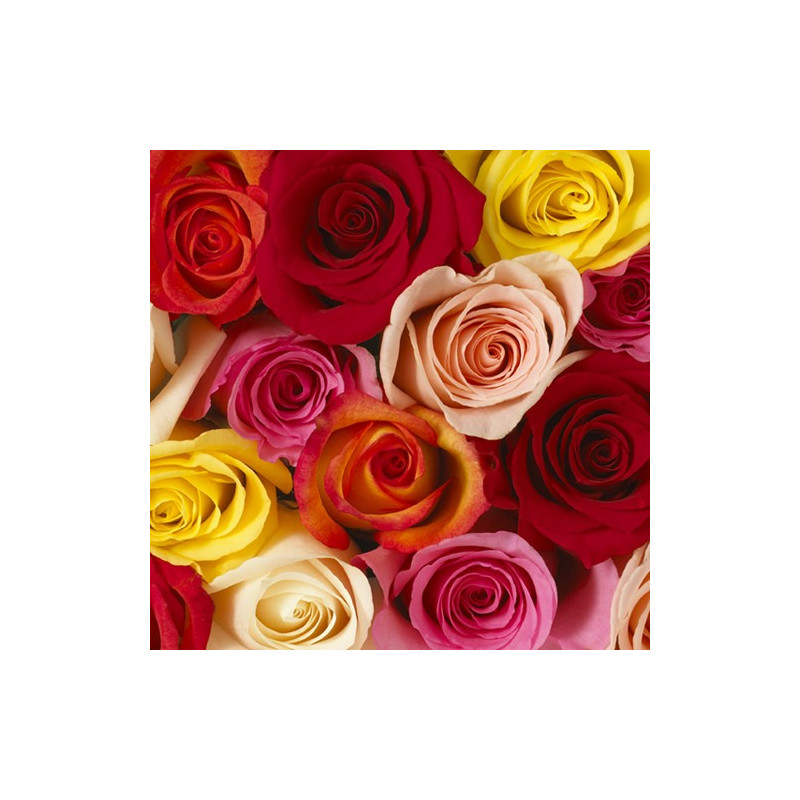 Premium Roses Assorted HALF BOX 200/250 Stems