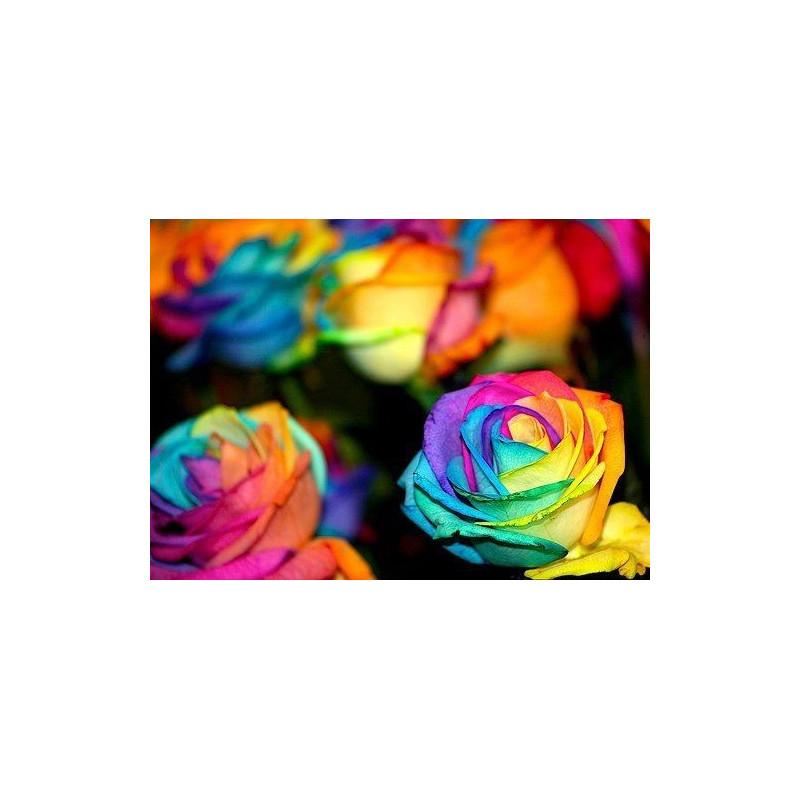 Tie Dye Roses 100 Stems 50cm