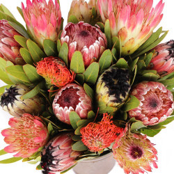 Protea Assorted 10  Stems