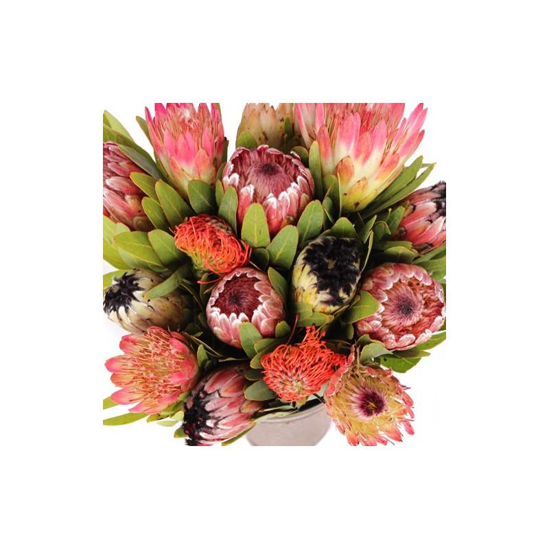 Protea Assorted 15 Stems