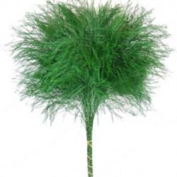 Tree Fern / Tree Fern Tips