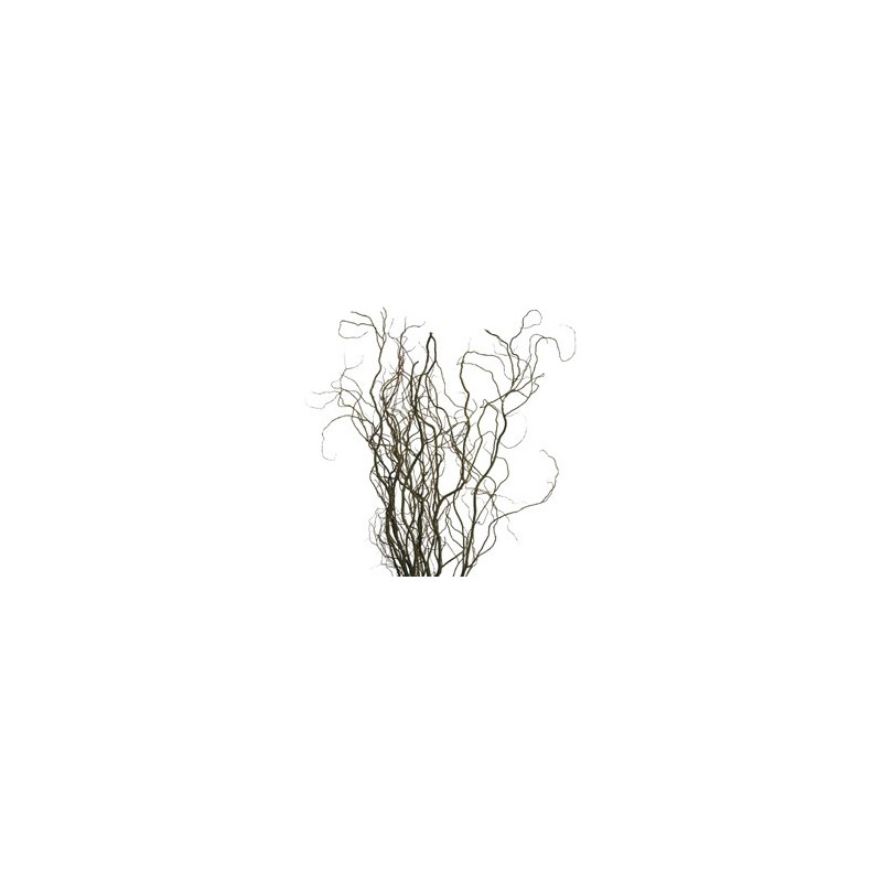 Curly Willow By the Bunch