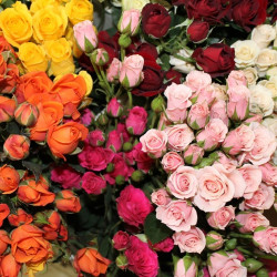Spray Roses Assorted By the Box 10 BUnches