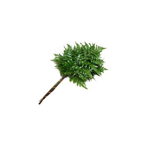 Leather Leaf Florists Choice