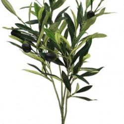 Branch Olive