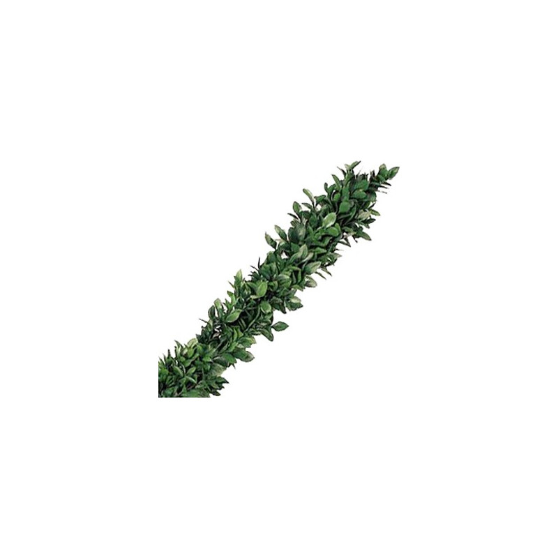 Israeli Ruscus Garland PRICE PER FOOT
