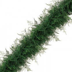 Plumosus Garland PRICE PER FOOT