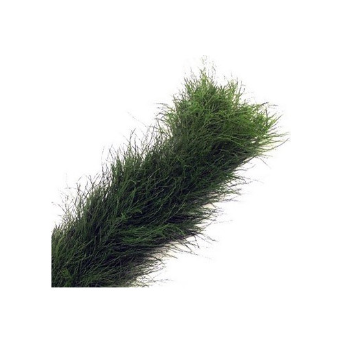 Tree Fern Garland PRICE PER FOOT