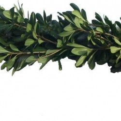 Green Pitt Garland PRICE PER FOOT
