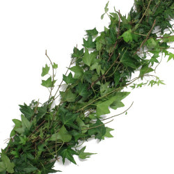 Green English Ivy Garland PRICE PER FOOT