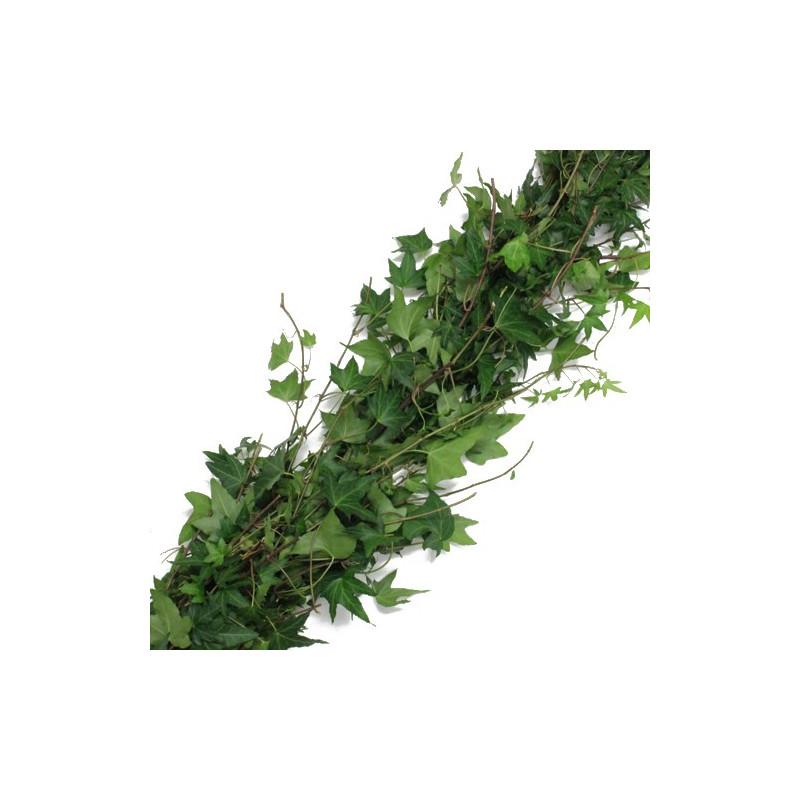 Green English Ivy Garland PRICE PER FOOT