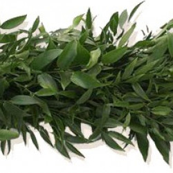 Italian Ruscus Garland PRICE PER FOOT