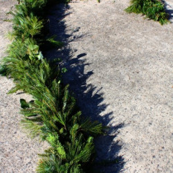 Leylandi Cedar  Garland PRICE PER FOOT