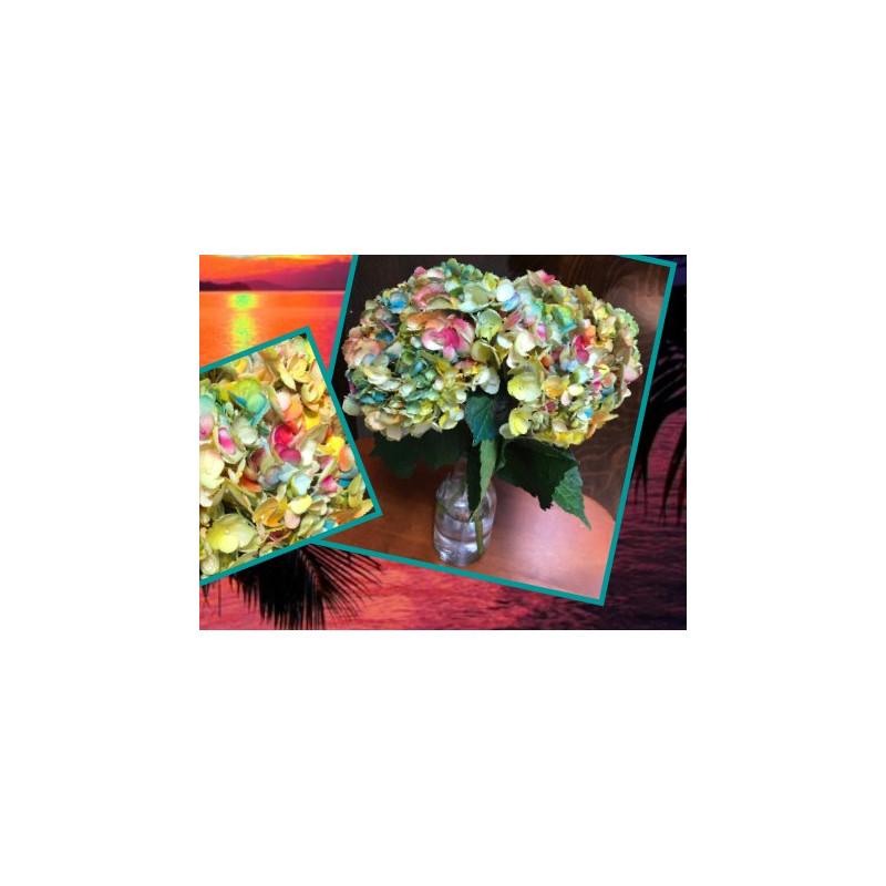 Hydrangea Tie Dye 20 stems