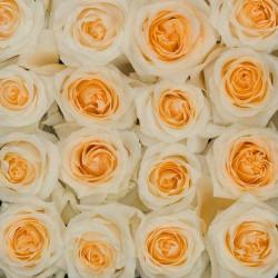 Creme de la creme Roses