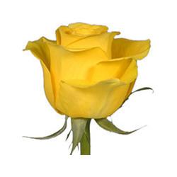 Color Fresh Tree Fern